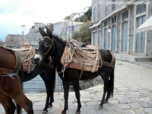 Argo Saronico